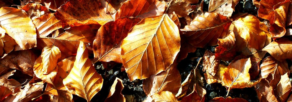 Photo of Autumn leaves